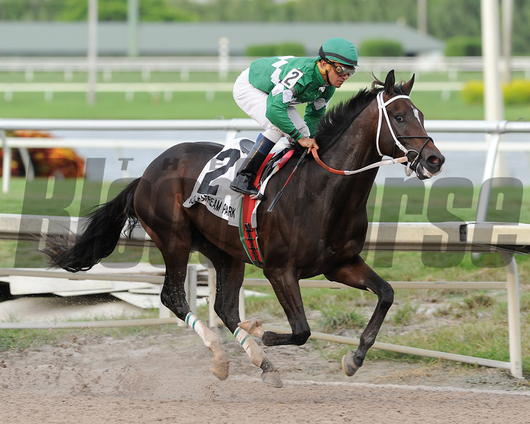 Three Rules wins the Florida Sire In Reality Division<br /> Coglianese Photos/Lauren King