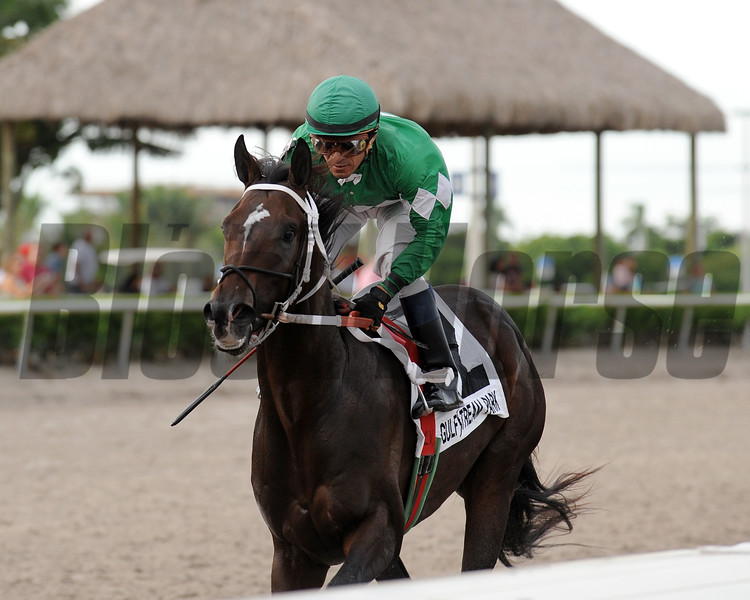 Three Rules wins the Florida Sire In Reality Division<br /> Coglianese Photos/Kenny Martin
