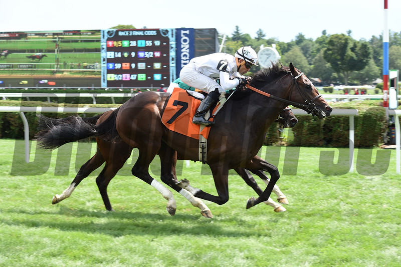 Good Samaritan - Maiden Win, Saratoga, August 13, 2016.<br /> Coglianese Photos