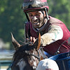 Jockey Kendrick Carmouche gives Haveyougoneaway a cooling bath after winning the 25th running of The Honorable Miss at the Saratoga Race Course Wednesday July 27, 2016 in Saratoga Springs, N.Y.  (Skip Dickstein/