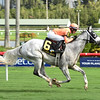 Spectacular Me wins the 2016 Claiming Crown Distaff Dash<br /> Coglianese Photos/Leslie Martin