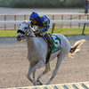 Mr. Jordan wins the 2016 Millions Classic Preview Stakes<br /> Coglianese Photos/Kenny Martin