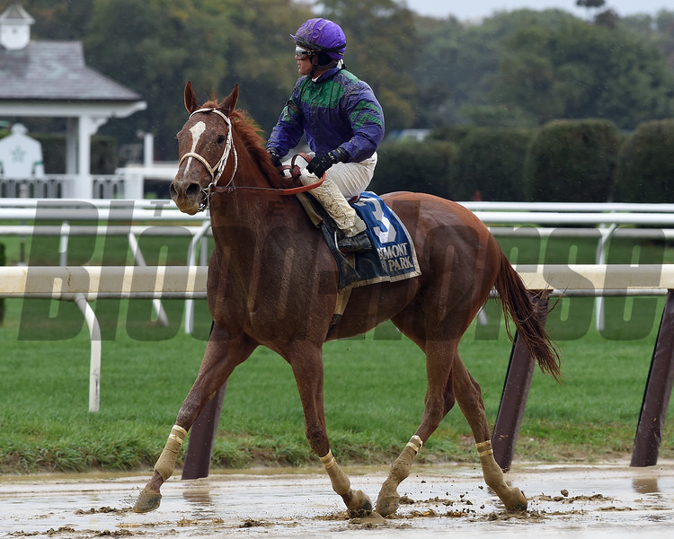 Quezon wins the 2016 Iroquois<br /> Coglianese Photos/Susie Raisher