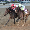 Connect wins the 2016 Cigar Mile<br /> Coglianese Photos/Chelsea Durand