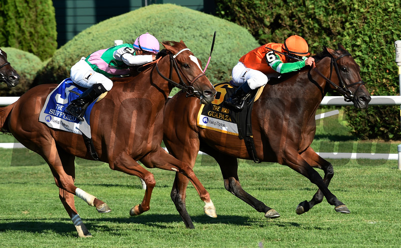 Guzpaza with jockey Javier Castellano wins the 13th running of The Fasig-Tipyon Waya Saturday August 6, 2016 at the Saratoga Race Course in Saratoga Springs, N.Y. .  Photo by Skip Dickstein