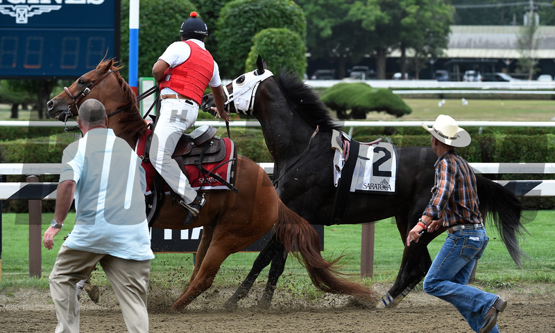 Laoban broke his maiden and also dropped his jockey Jose Ortiz after the race and won the 53rd running of the Jim Dandy at Saratoga 7/30/16.  Photo by Skip Dickstein