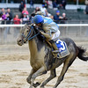 Joking wins the 2016 Vosburgh Stakes.<br /> Coglianese Photos/Chelsea Durand