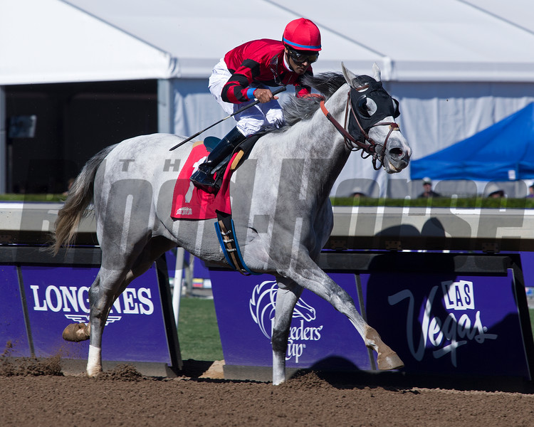 Scuba with Kendrick Carmouche wins the Marathon Stakes (gr. II). Trained by Brendan Walsh<br /> Morning scenes at Santa Anita in preparation for 2016 Breeders' Cup on Nov. 3, 2016, in Arcadia, CA.