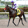 Nyquist wins the 2016 Florida Derby<br /> Coglianese Photos/Lauren King