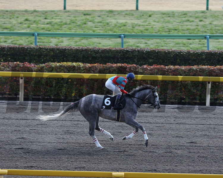 Lani running in the Hyacinth Stakes.<br /> Masakazu Takahashi Photo