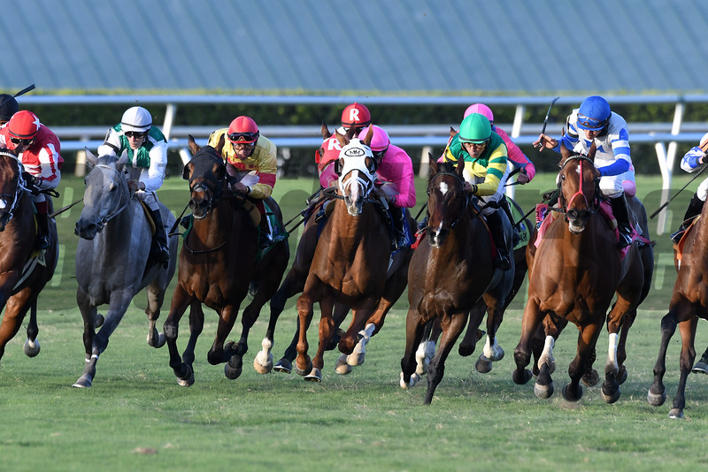 Taghleeb wins the 2016 H. Allen Jerkens Stakes<br /> Coglianese Photos/Andie Biancone
