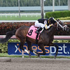 Faja - Maiden Win, Gulfstream Park, December 17, 2016<br /> Coglianese Photos/Leslie Martin