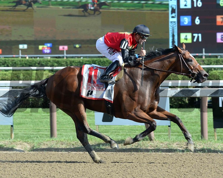 A. P. Indian wins the 2016 Forego Stakes.<br /> Coglianese Photos/Chris Rahayel