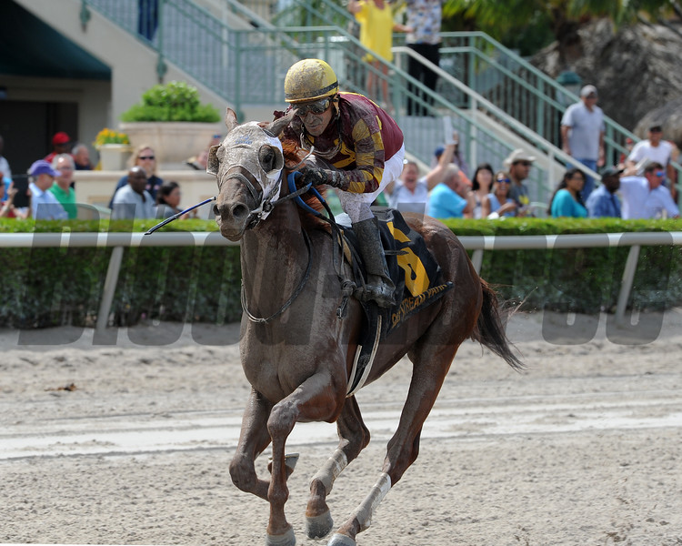 Rated R Superstar wins the 2016 Carry Back Stakes.<br /> Lauren King/Coglianese Photos