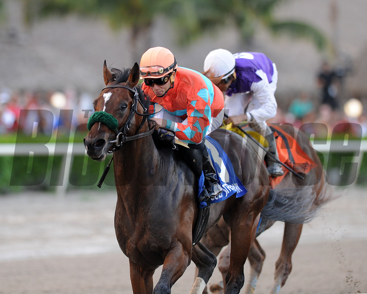 Awesome Speed wins the 2016 Mucho Macho Man Stakes.<br /> Coglianese Photos/Kenny Martin