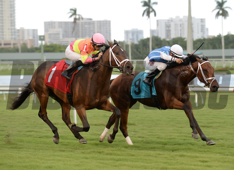 Holiday Stone AOC win, Gulfstream, December 17, 2016<br /> Coglianese Photos/Andie Biancone