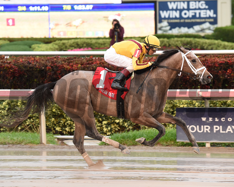 Fact Finding wins the 2016 Smooth Air Stakes.<br /> Coglianese Photos/Leslie Martin