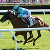 Dacita wins the 2016 New York Stakes. <br /> Coglianese Photos