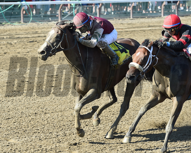 Haveyougoneaway wins the 2016 Honorable Miss.<br /> Coglianese Photos/Jamie Coulter