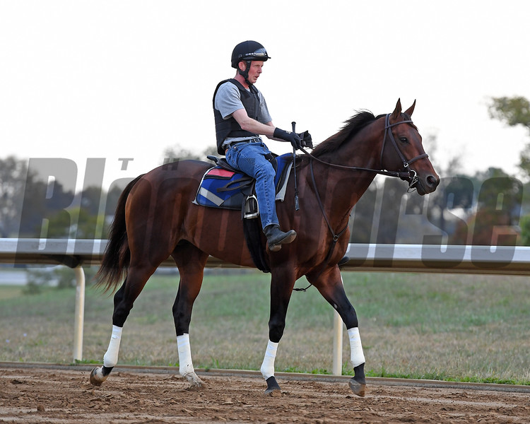 Runhappy with Marcus O'Donnell works at Keeneland on Oct. 19, 2016