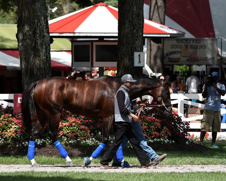 Songbird is schooled in the paddock at the Saratoga Race Course Thursday Aug. 18, 2016 in Saratoga Springs, N.Y. for Saturday's Alabama.  Photo by Skip Dickstein