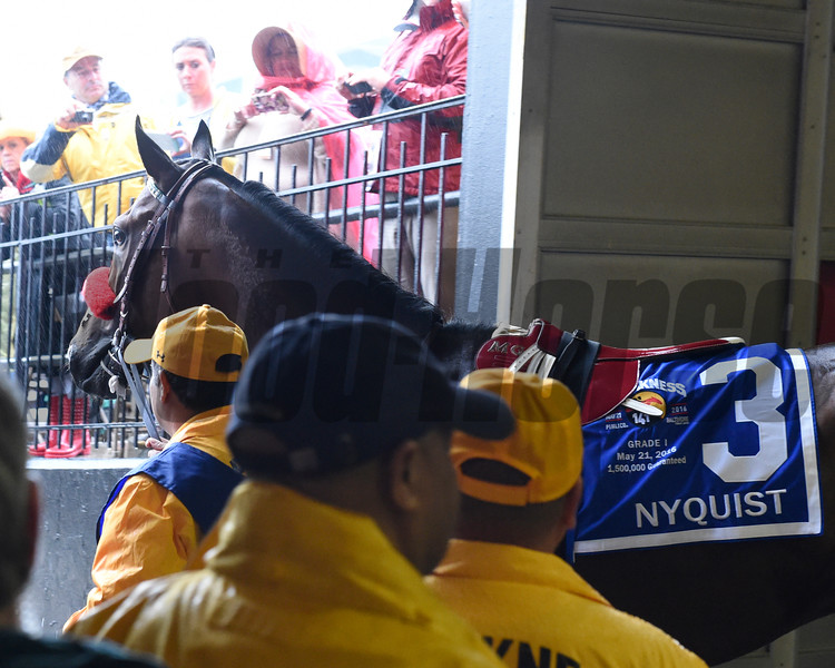 Nyquist heads to the track at the Preakness.<br /> Photo by Skip Dickstein