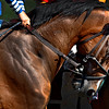 The hands of Jockey Mike Luzzi keeps a hold of Here Comes Tommy in the seventh race on the main track at the Saratoga Race Course Friday July 29, 2016 in Saratoga Springs, N.Y.  (Skip Dickstein