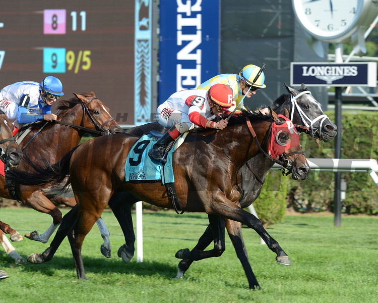 Camelot Kitten wins the 2016 National Museum of Racing Hall of Fame Stakes.<br /> Coglianese Photos/Susie Raisher