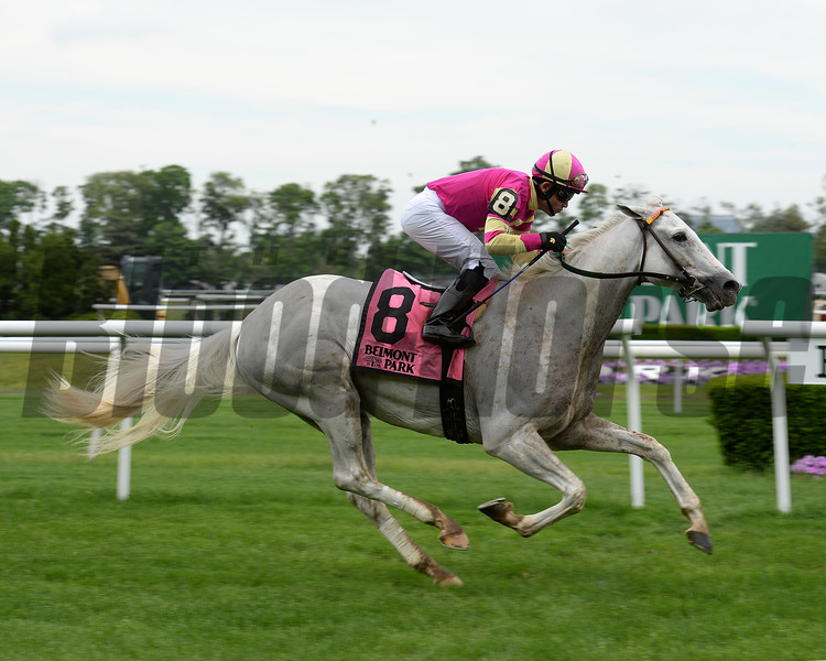 Tapitation wins the Kingston Stakes at Belmont Park May 30, 2016<br /> Coglianese Photos/Chelsea Durand
