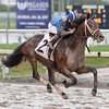 Shamsaan - Maiden Win, Gulfstream Park, December 10, 2016<br /> Coglianese Photos/Lauren King