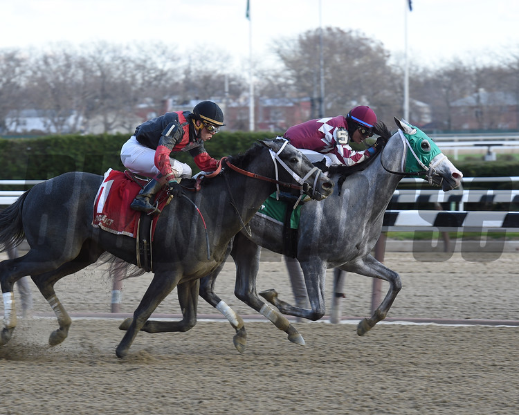 Even Thunder wins the 2016 King's Swan Stakes.<br /> Coglianese Photos
