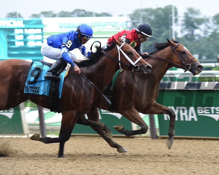 A. P. Indian wins the 2016 Belmont Sprint Championship<br /> Coglianese Photos/Susie Raisher