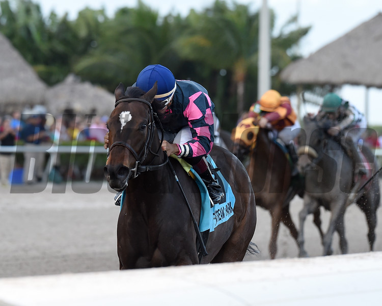 Bodacious Babe wins the 2016 Margate Stakes.<br /> Coglianese Photos/Andie Biancone