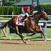 A. P. Indian wins the 2016 Forego<br /> Coglianese Photos