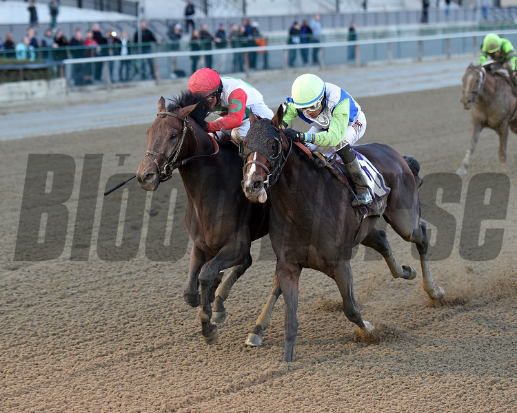 Connect wins the Cigar Mile Handicap (gr. I) at Aqueduct on November 26, 2016.
