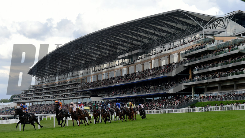 Sword Fighter wins the 2016 Queens Vase at Royal Ascot on June 17, 2016.<br /> Mathea Kelley Photo