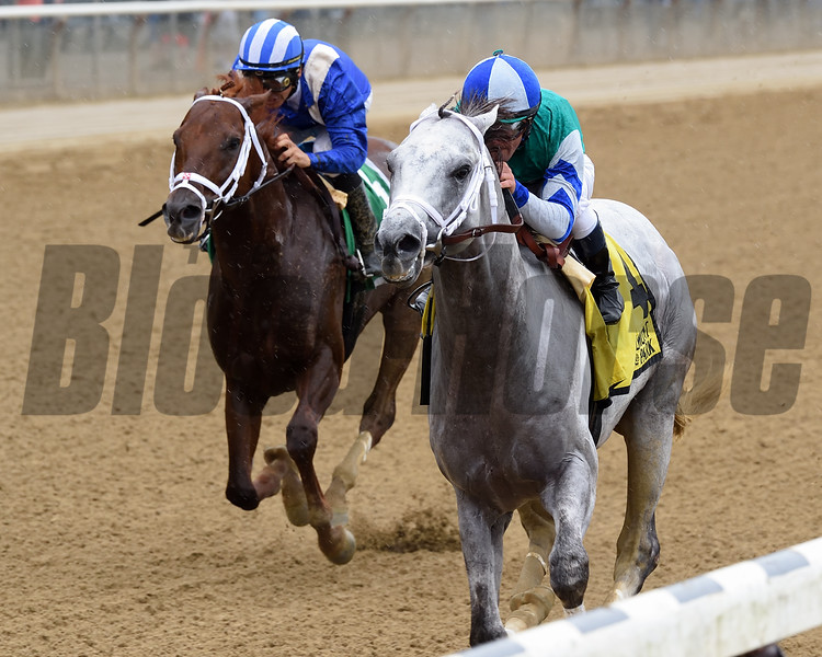 Anchor Down wins the 2016 Kelso Handicap.<br /> Coglianese Photos/Chelsea Durand