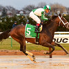 Haul Anchor wins the 2016 Damon Runyon.<br /> Coglianese Photos/Robert Mauhar