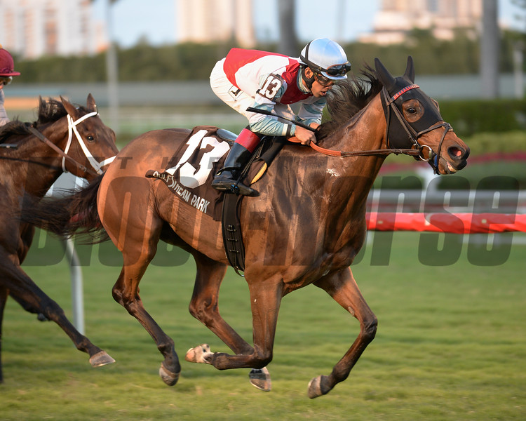 Ultra Brat wins the 2016 Tropical Park Oaks<br /> Coglianese Photos/Lauren King