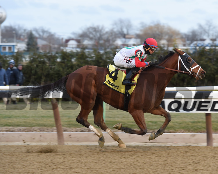 Send It In wins the 2016 Alex M. Robb Stakes<br /> Coglianese Photos/Chelsea Durand