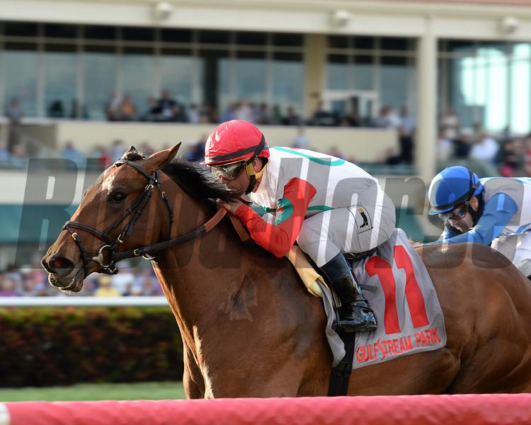 Converge wins the 2016 Palm Beach Stakes.<br /> Coglianese Photos