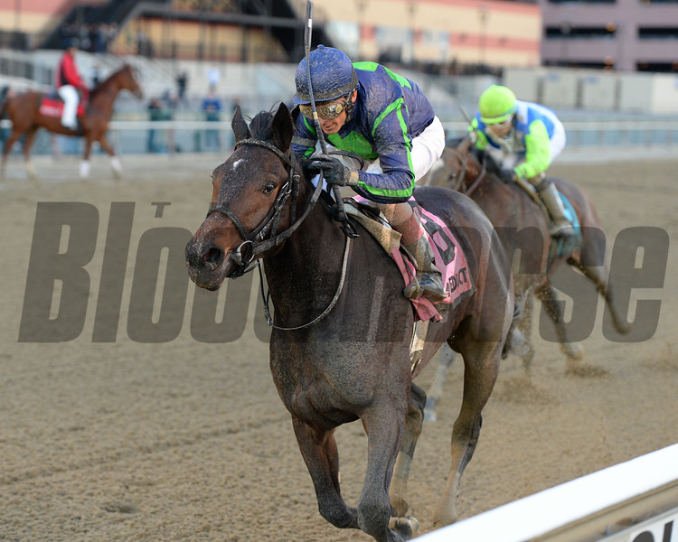 Mo Town wins the 2016 Remsen Stakes<br /> Coglianese Photos/Joe Labozzetta