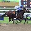 Royal Copy - Maiden Win, Saratoga, August 13, 2016.<br /> Coglianese Photos