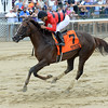 Weekend Hideaway wins the Commentator Stakes May 30, 2016<br /> Coglianese Photos/Chelsea Durand