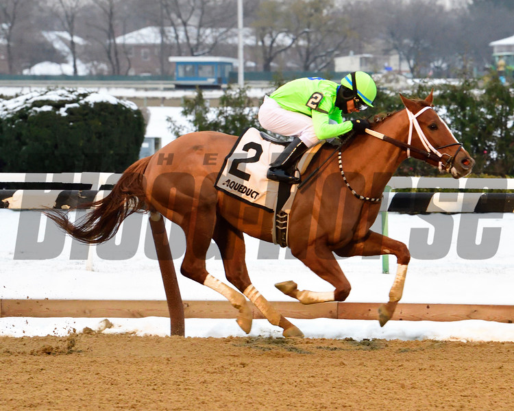 War Story wins the 2016 Queens County Stakes.<br /> Coglianese Photos/Robert Mauhar