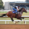 Runhappy works at Keeneland on Oct. 19, 2016