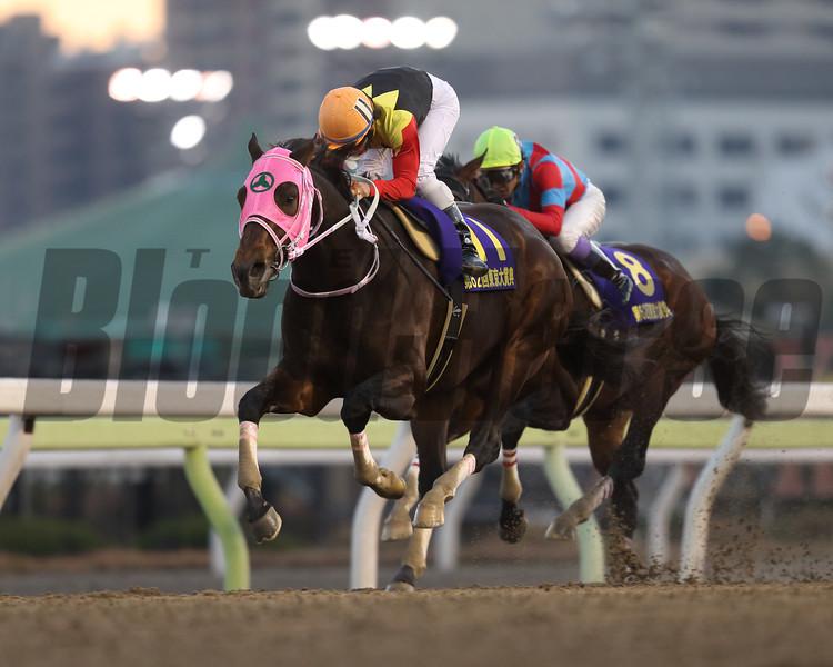 Apollo Kentucky wins the Tokyo Daishoten (gr. I) at Tokyo City Keiba on December 29, 2016.