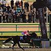 2016 Februaru Stakes-BH1-NI
