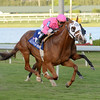 Taghleeb wins the 2016 H. Allen Jerkens Stakes<br /> Coglianese Photos/Lauren King