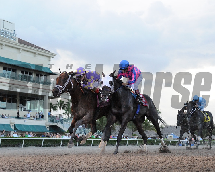Awesome Banner wins the 2016 Florida Sire Series - Prized Division<br /> Coglianese Photos/Leslie Martin